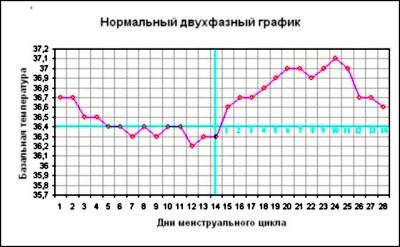 Базальная температура перед месячными и беременность