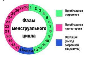 график базальной температуры при овуляции