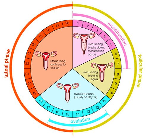 начало менструационного цикла после родов